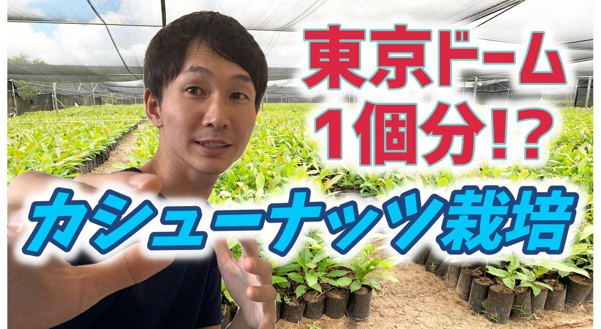 f:id:yachiro:20200216204643j:plain