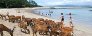 阿久根大島海水浴場