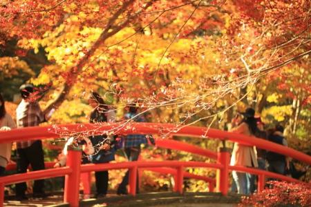紅葉の伊香保温泉 河鹿橋