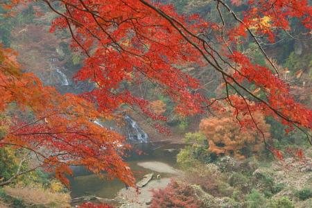 紅葉の養老渓谷 粟又の滝