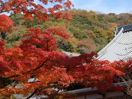 紅葉の鎌倉