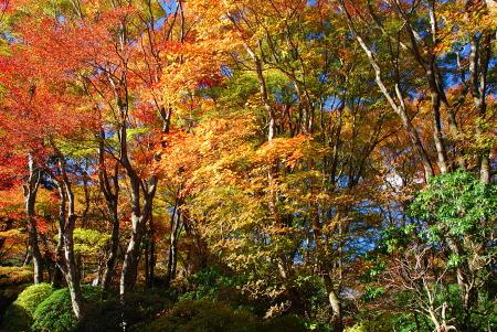 紅葉の箱根蓬莱園