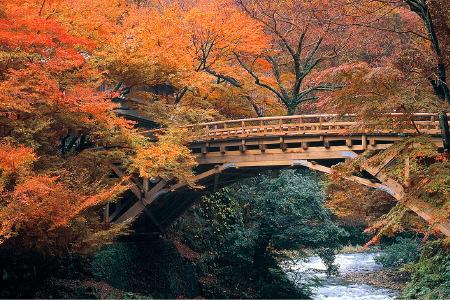 紅葉の鶴仙渓こおろぎ橋