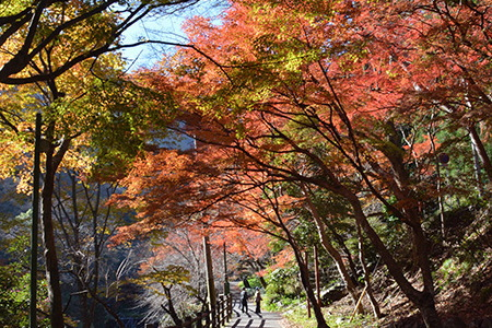 紅葉の養老公園