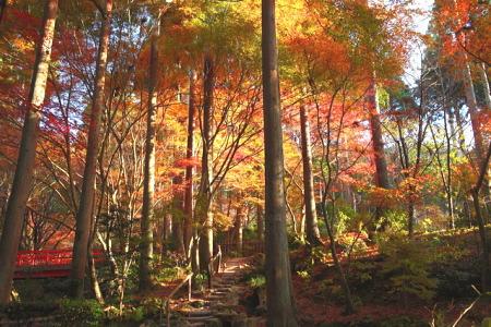 紅葉の大原三千院