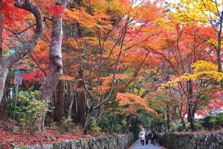 紅葉の興聖寺の参道