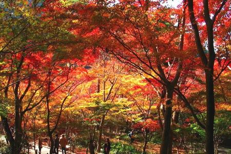 紅葉の瑞宝寺公園