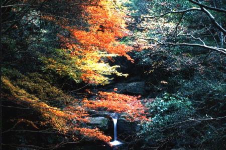 紅葉の犬鳴山