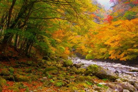 紅葉のべふ峡