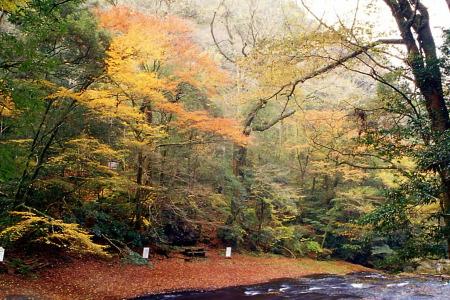 紅葉の菊池渓谷