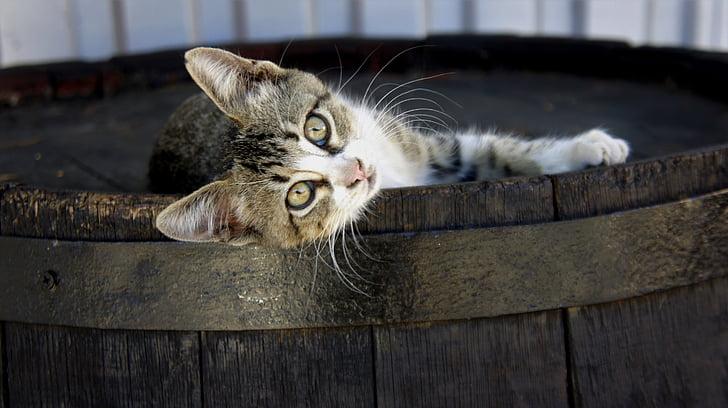 cask cat