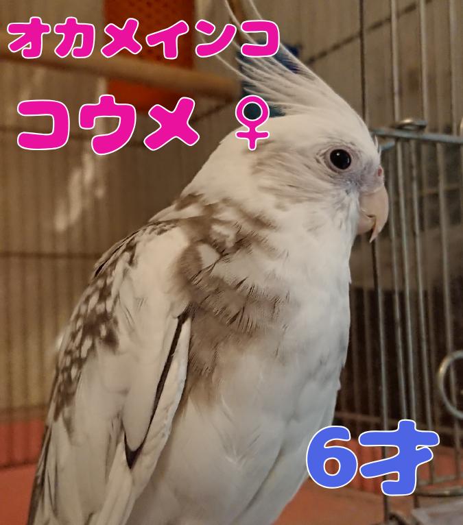 f:id:yagami-yukke:20191128192502p:plain