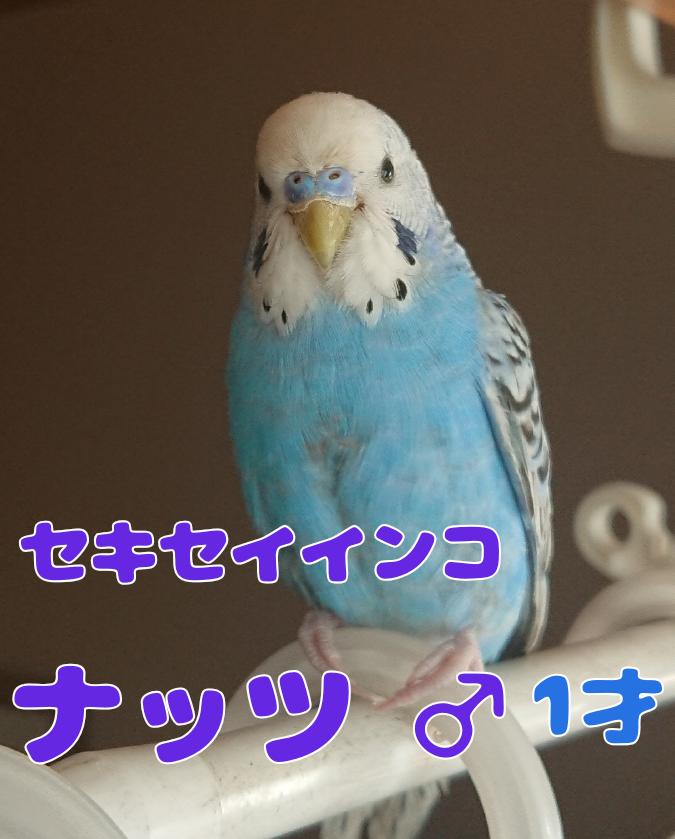 f:id:yagami-yukke:20191128192551p:plain