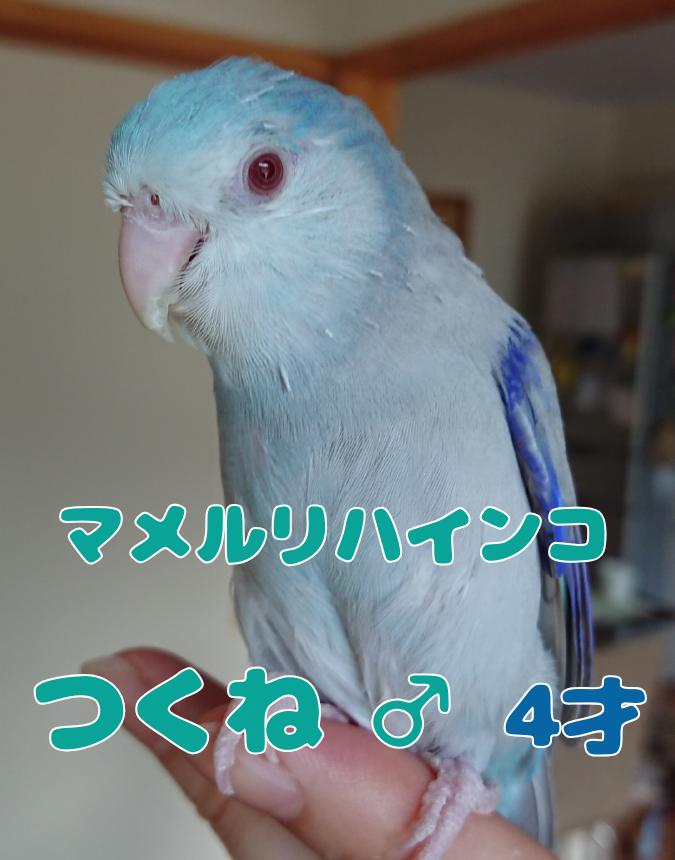 f:id:yagami-yukke:20191128195121p:plain