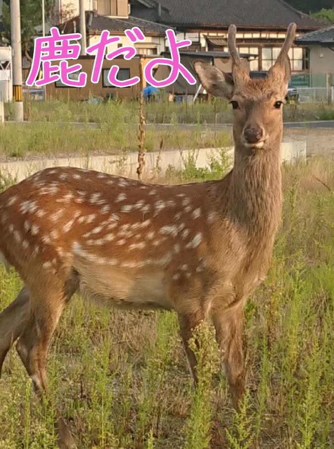 f:id:yagami-yukke:20200408234239p:plain