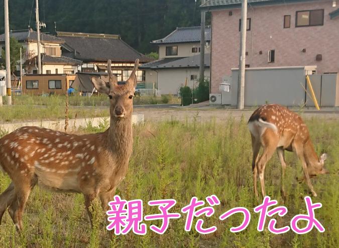 f:id:yagami-yukke:20200408234258p:plain