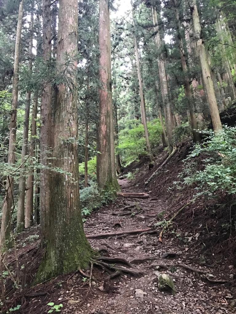f:id:yagi_suke:20170811121419j:plain