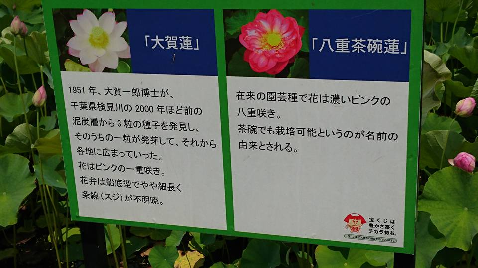 f:id:yagikatsuji:20170627181539j:plain