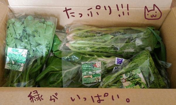 きづファームオールスター福袋野菜セット