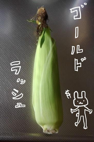 トウモロコシ ゴールドラッシュ
