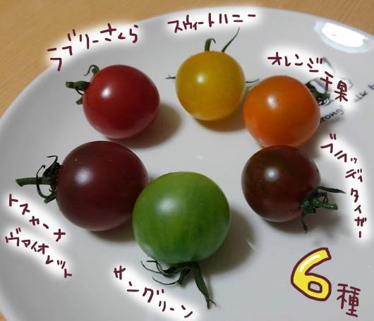 食べチョク ミニトマト