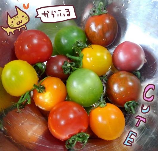 食べチョク ミニトマト6種