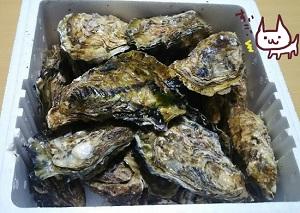 広島産牡蠣