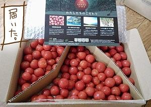 ももちゃんトマト