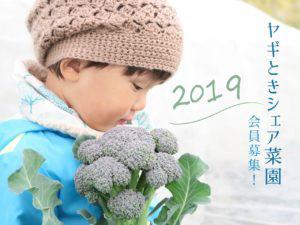 f:id:yagitokidokiyasai:20191110013516j:plain