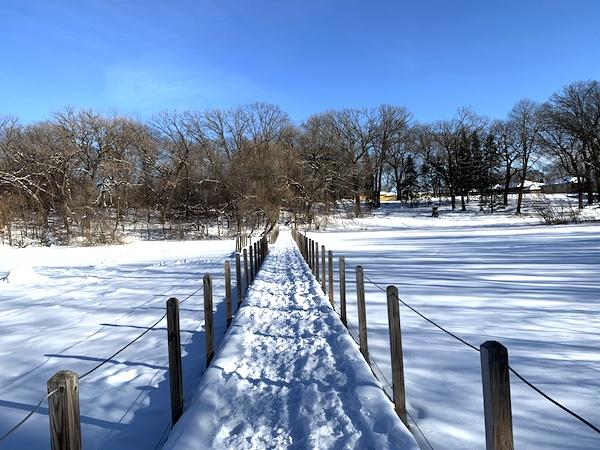 公園の池はがっしり凍っています