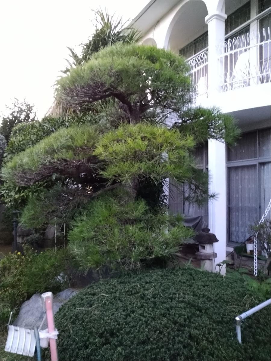 f:id:yakichimususu:20201128195517j:plain