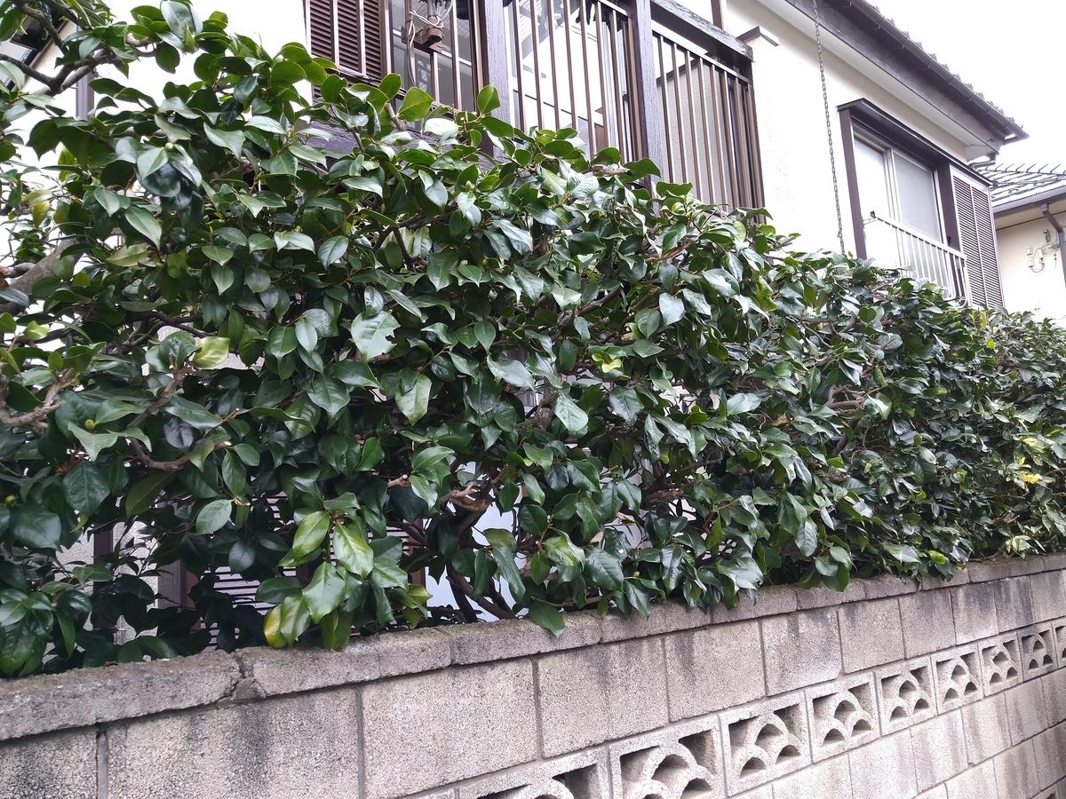 f:id:yakichimususu:20201129174310j:plain