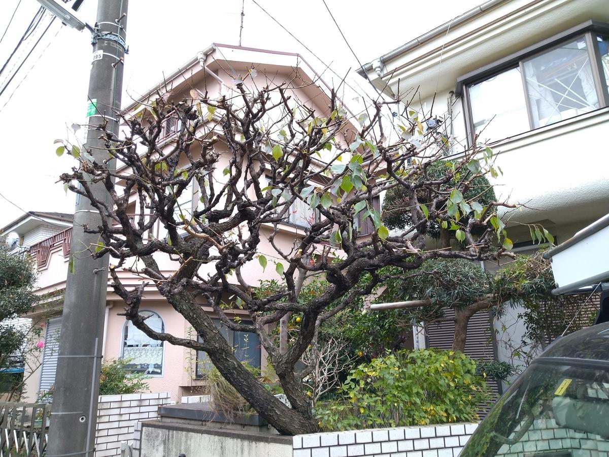 f:id:yakichimususu:20201202164149j:plain