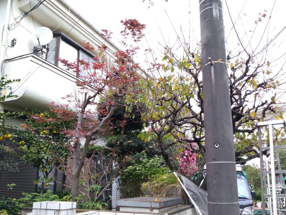 f:id:yakichimususu:20201202164223j:plain