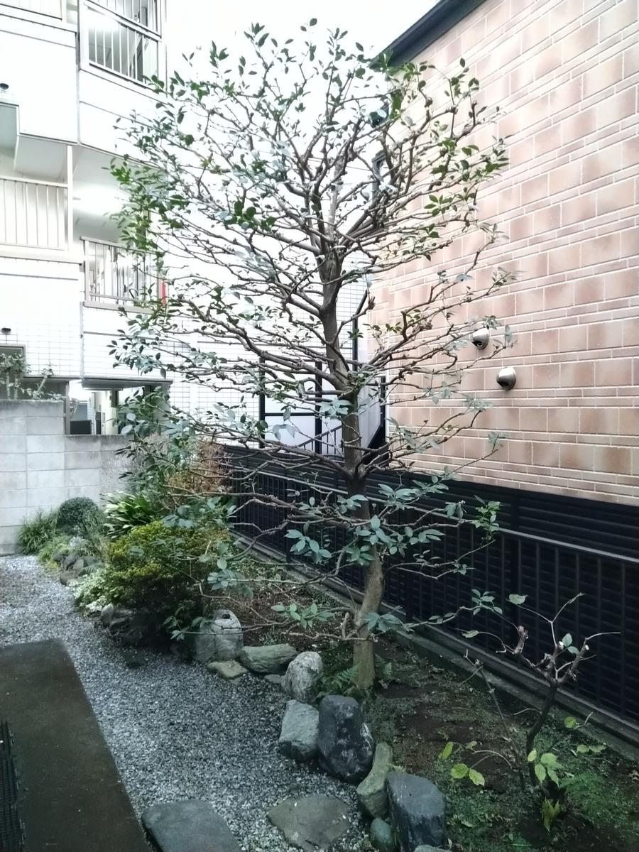 f:id:yakichimususu:20201203195821j:plain