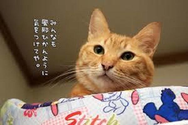 f:id:yakiniku-kurozakura:20161018165611j:plain