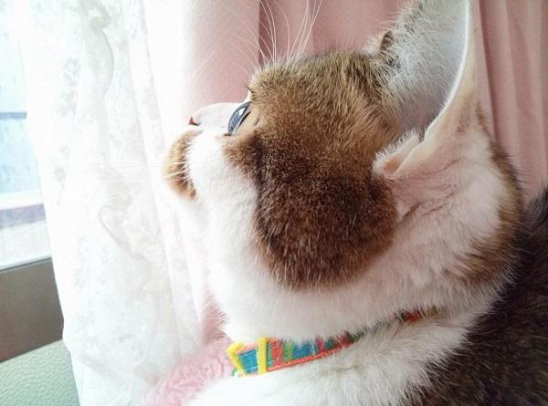 f:id:yakiniku-kurozakura:20170303171130j:plain