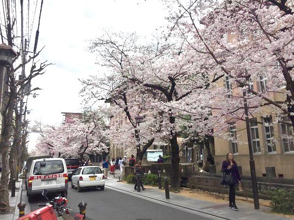f:id:yakiniku-kurozakura:20170407113432j:plain
