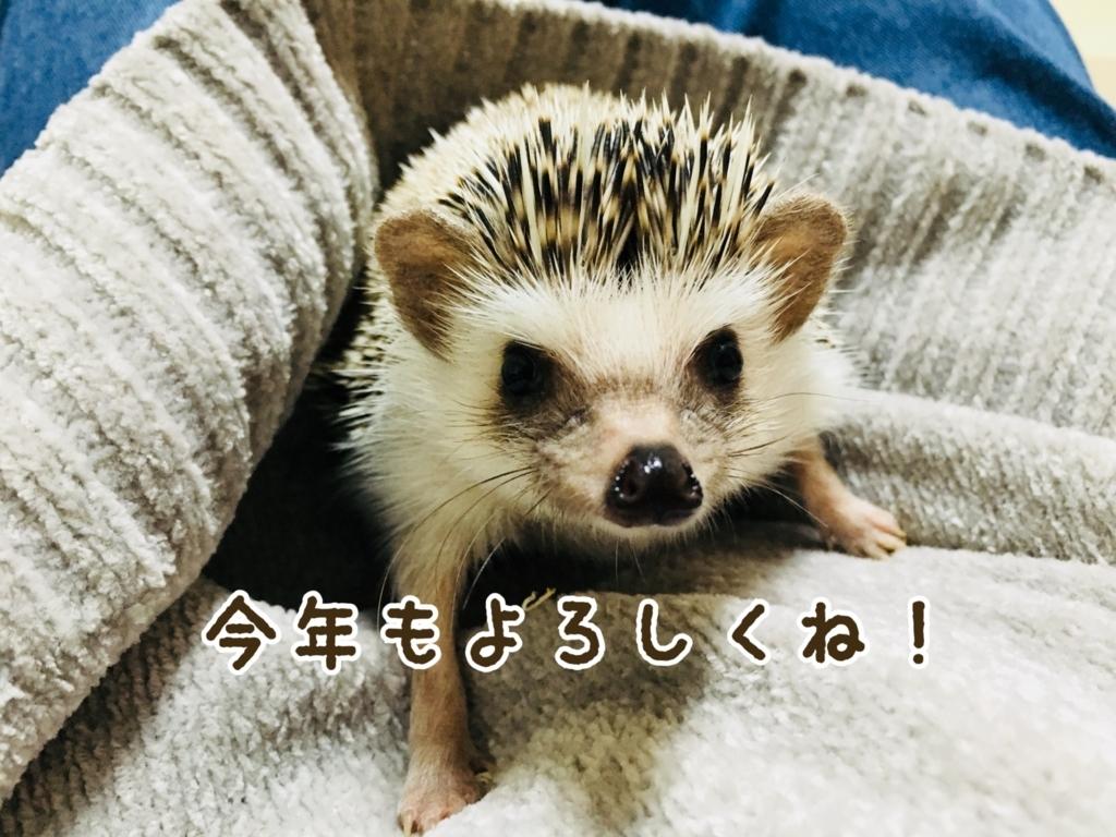 f:id:yakitoripie:20180101092649j:plain