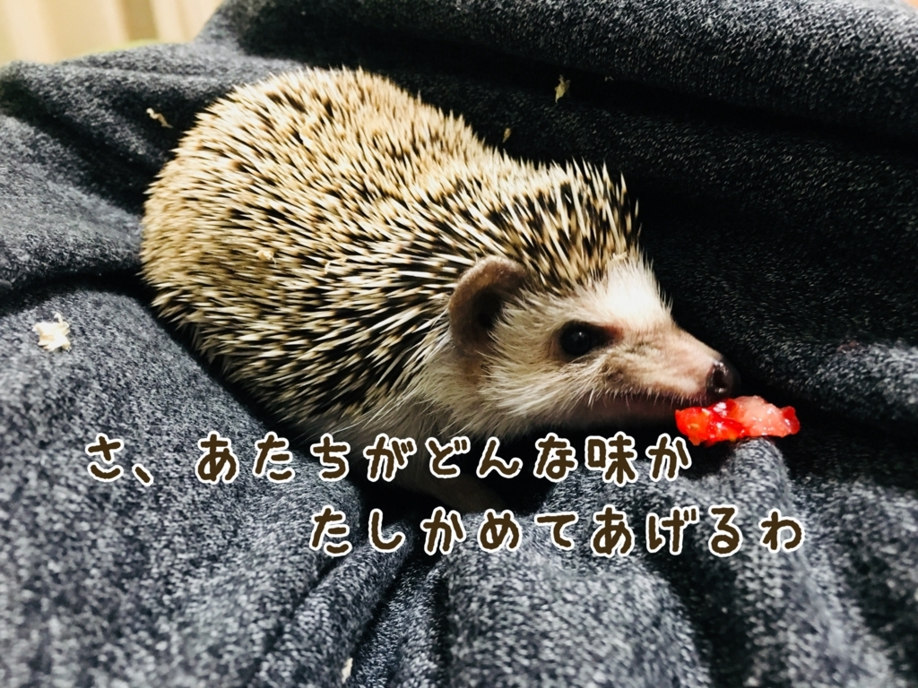 f:id:yakitoripie:20180128085901j:plain