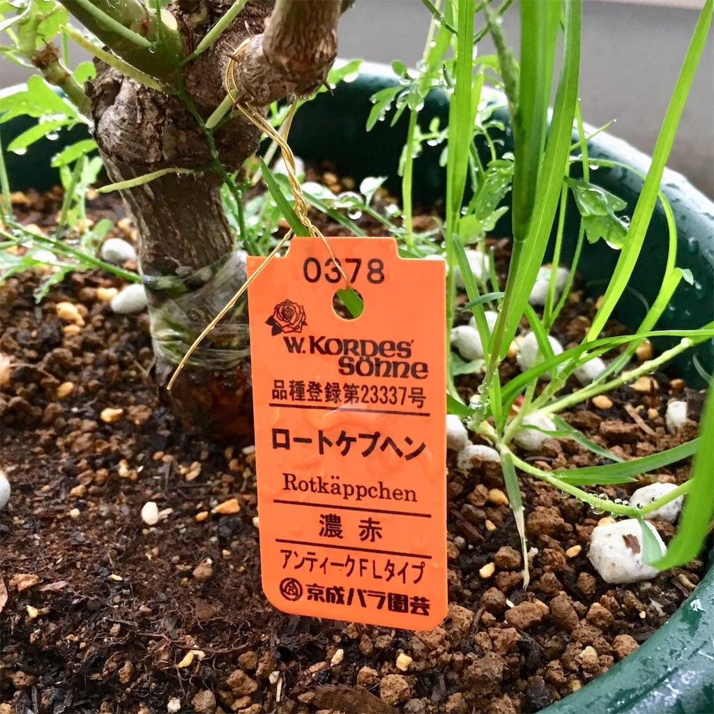 f:id:yakitoripie:20190424061048j:image