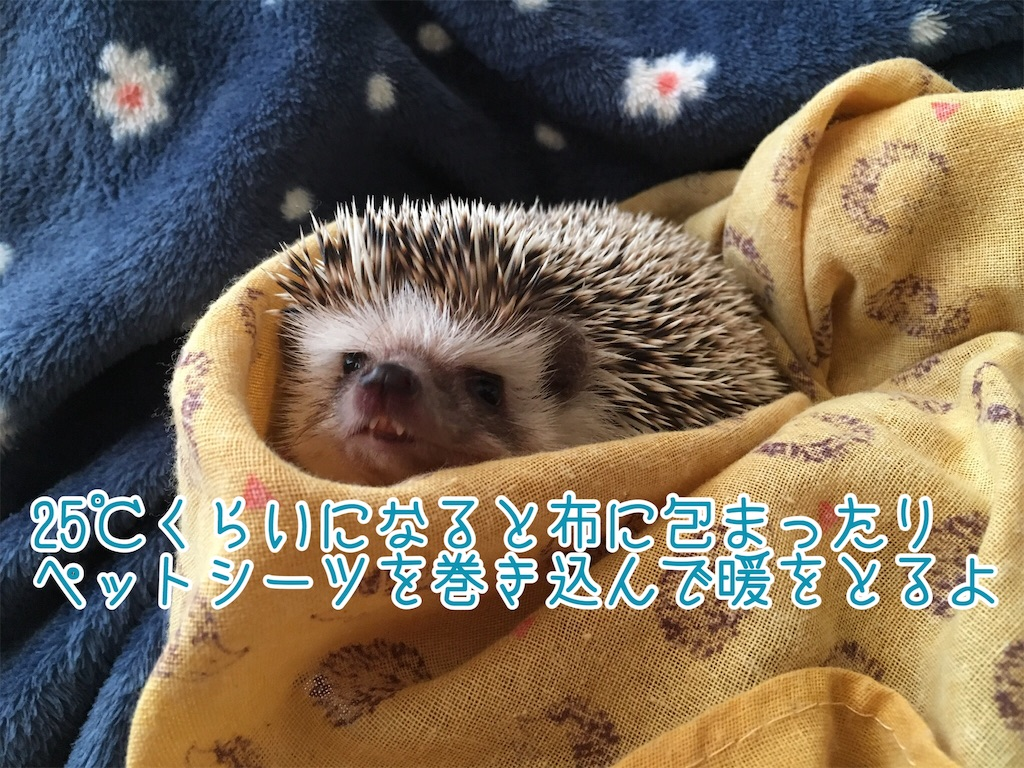 f:id:yakitoripie:20190612060655j:image