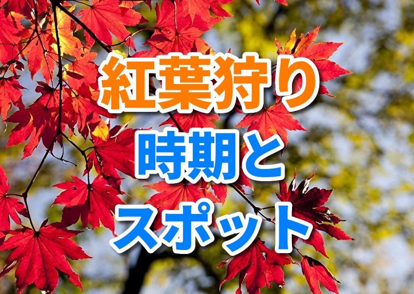 f:id:yakudacchi:20191009172837j:plain