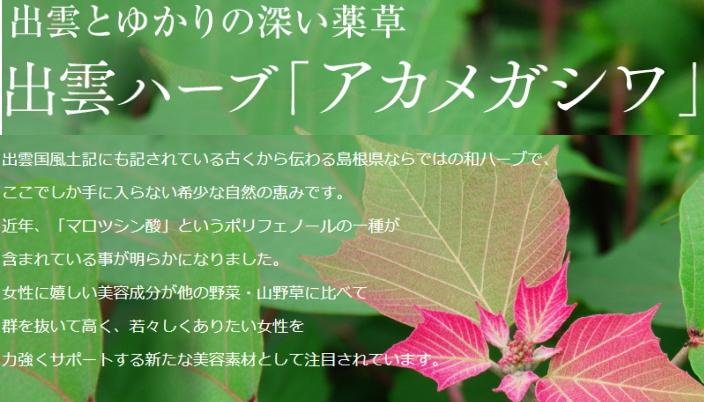 f:id:yakudacchi:20201217180919j:plain