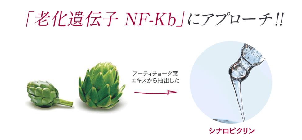 f:id:yakudacchi:20210205153352p:plain