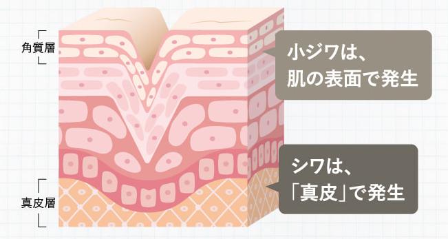 f:id:yakudacchi:20210322172544p:plain