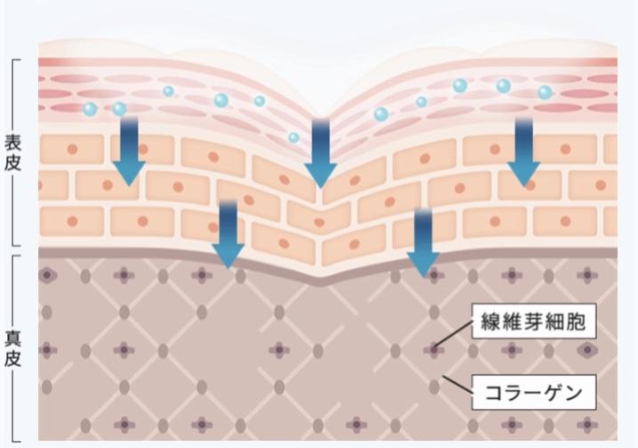 f:id:yakudacchi:20210525164735j:plain