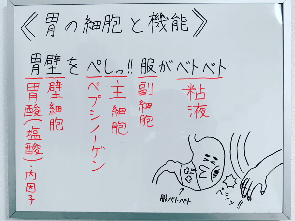f:id:yakugakun:20200224220745j:plain