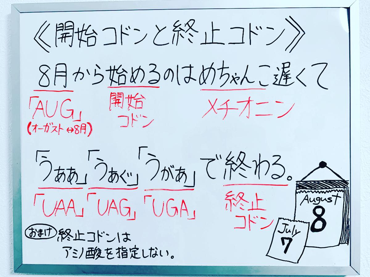 f:id:yakugakun:20200224223628j:plain