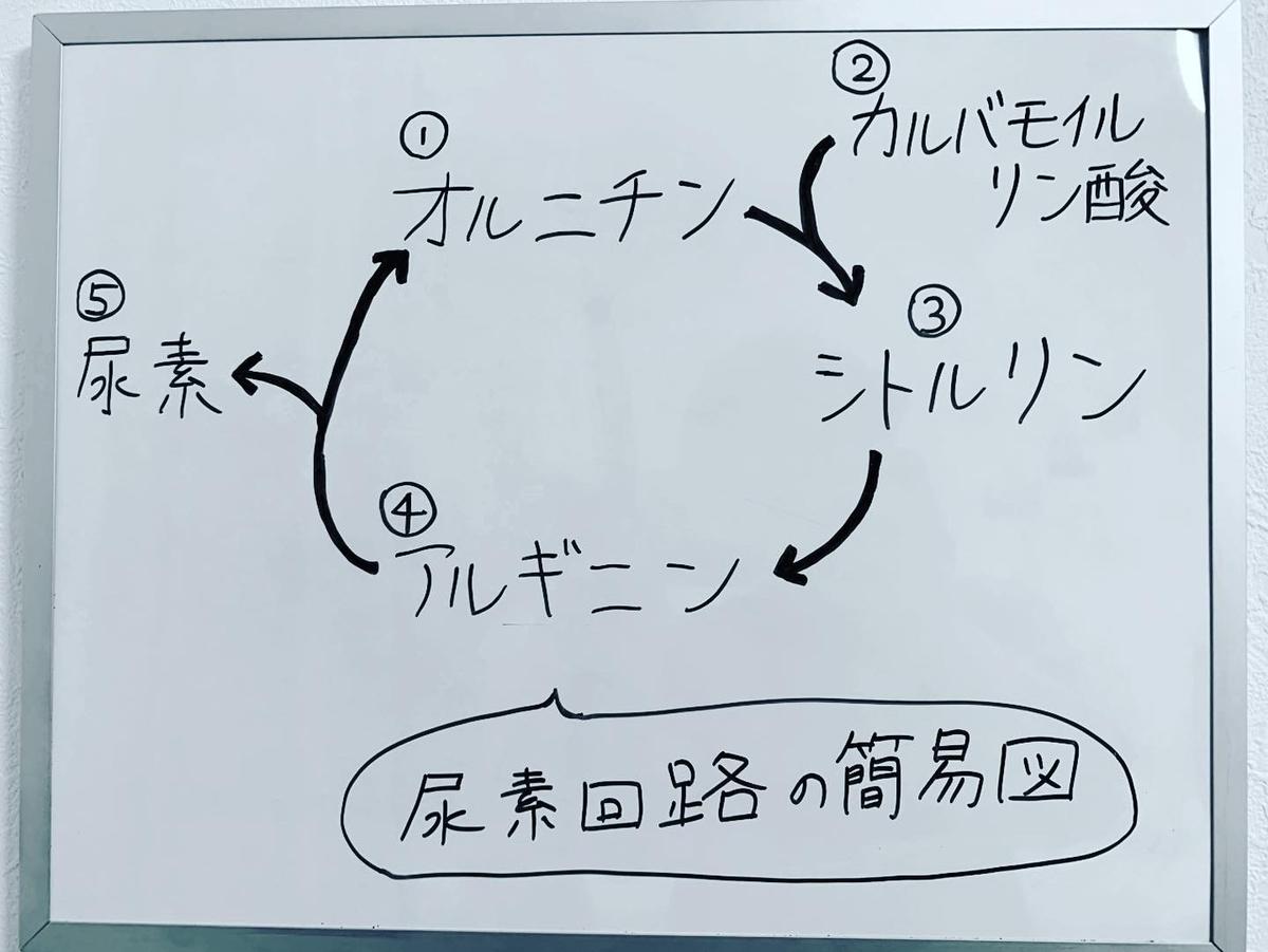 f:id:yakugakun:20200225200513j:plain